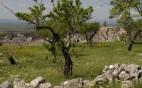 minervino-murge-paesaggio