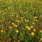 campo di fiori, Salve
