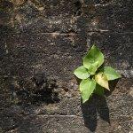 proposta-di-legge-contro-consumo-di-suolo