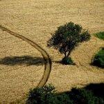 Montesegale-Borgo-Autentico-d-Italia-buon-governo