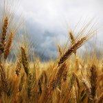 monte santa maria tiberina convengo agricoltura biologica quali opportunità