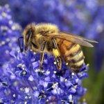 salviamo-api-agricoltori