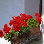 casamassima balcone fiorito