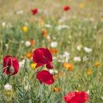 montesegale, escursione alla scoperta dei fiori e della flora dell'oltrepò pavese