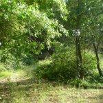 lo-spirito-del-bosco-collepasso-borghi-autentici