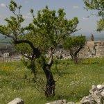 Minervino Murge escursione borghi autentici d'italia