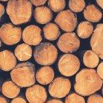 sutrio la magia del legno edizione 2016