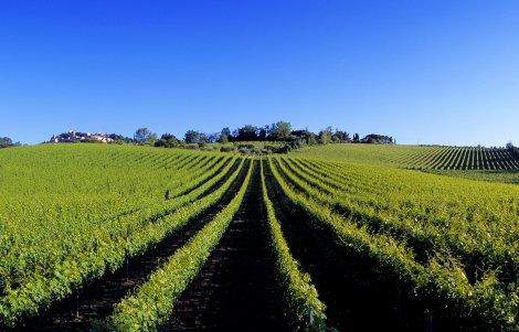 il-vignone-sotto-a-bertinoro