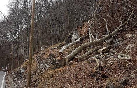 legname-Forni-di-Sotto