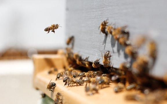 Festa-api-Minervino-di-Lecce