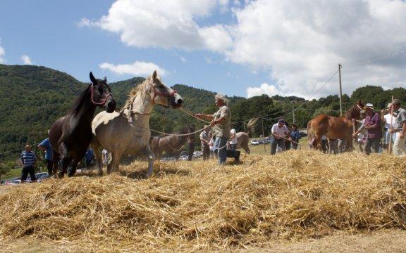 Carovilli-La tresca-trebbiatura del grano con i cavalli