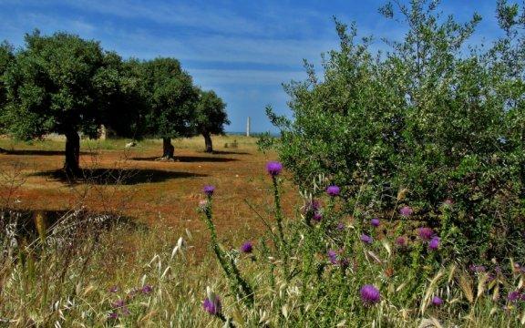Matino-paesaggio-rurale