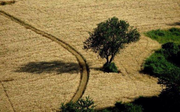 Montesegale-campo