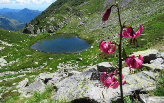 Ormea-fiore-martagone-e-lago-Pizzo