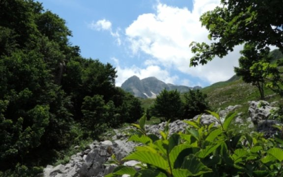 Pizzone Monte Meta e Rhamnus alpina