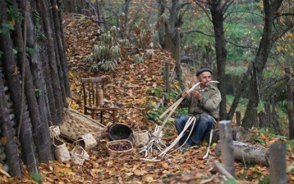 Tramonti-artigiano nel bosco
