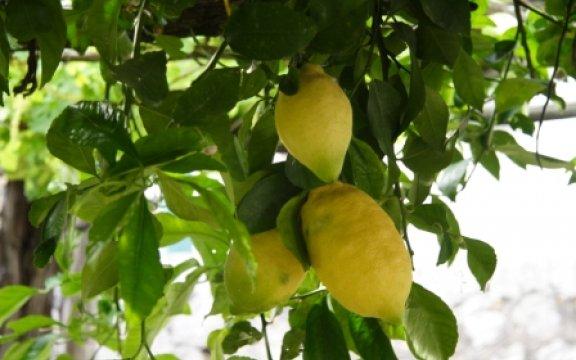 Tramonti-limoni della costiera
