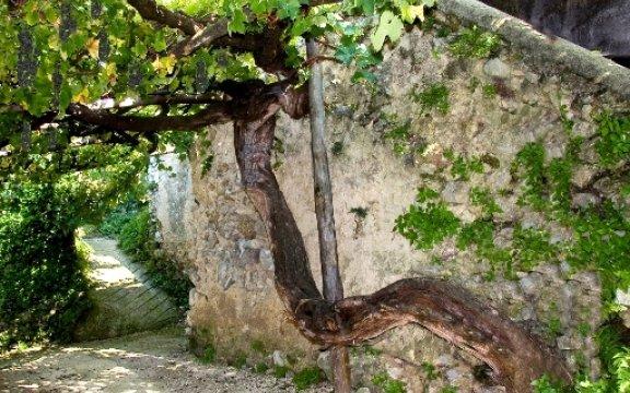 Tramonti-vitigno-secolare