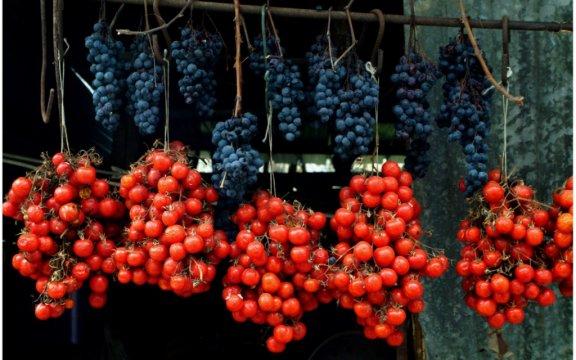 Tramonti-pomodoro fiascone-uva-tintore
