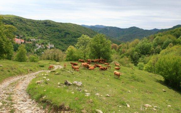 Val-Brugneto-Parco-dell'Antola-foto-Marco-Carraro