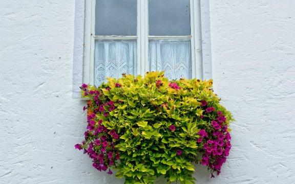 casamassima balcone fiorito nel borgo antico