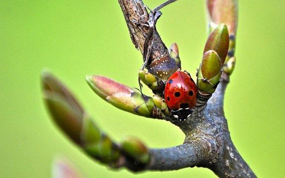 Coccinella-città-libere-dai-pesticidi