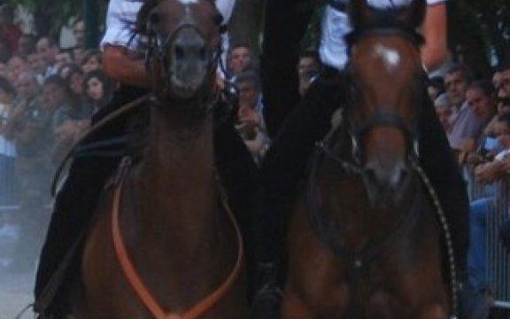 Silanus Corsa cavalli