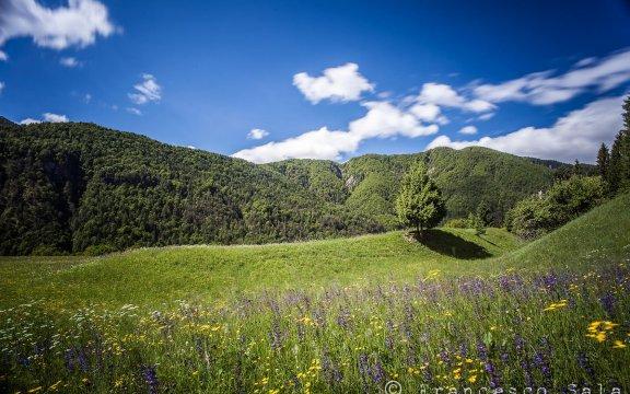 forni di sotto, udine, paesaggio primaverile, weekend all'insegna della natura