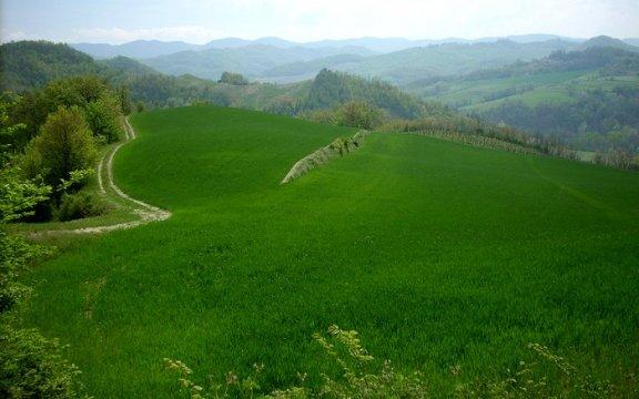 Montesegale Verde