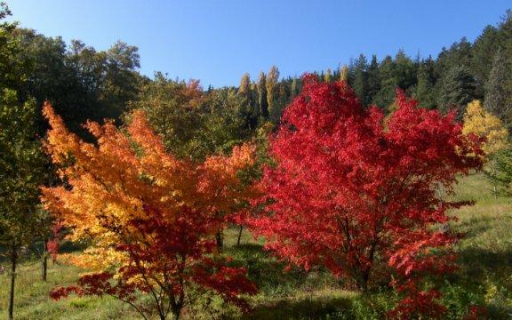 pietralunga Passeggiata tra natura e sapori nella valle del Carpina