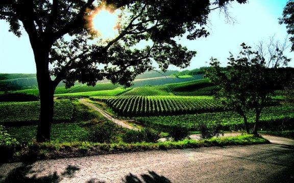 Predappio-panorama-sui-vigneti-turismo-rurale