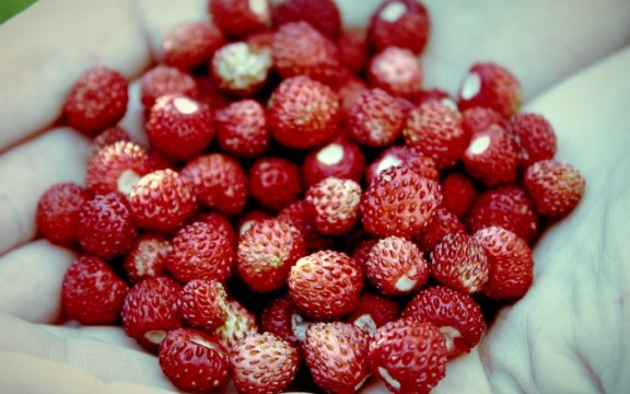 Raveo Frutti di bosco