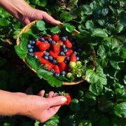 piccoli-frutti-bernezzo-atlante-dei-sapori-saluzzo