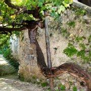 Tramonti-Borghi-Autentivi-antico-vitigno-Tintore