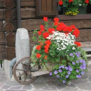 festa nazionale borghi autentici 2008 sauris dettaglio del borgo fiori
