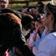 festa nazionale borghi autentici 2013 tresigallo inaugurazione spettacolo di falconeria